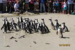 isa-carstens-penguin-day-oct2013-05