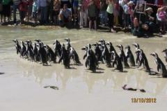 isa-carstens-penguin-day-oct2013-06