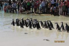 isa-carstens-penguin-day-oct2013-07